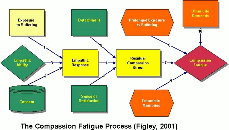 VetMed Survival Guide - Compassion Fatigue