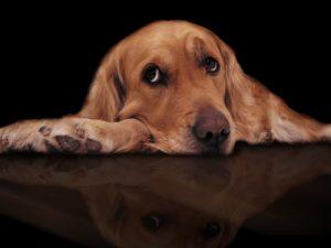 Compassion Fatigue - VetMed Survival Guide
